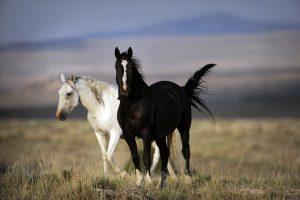 horses inner clock