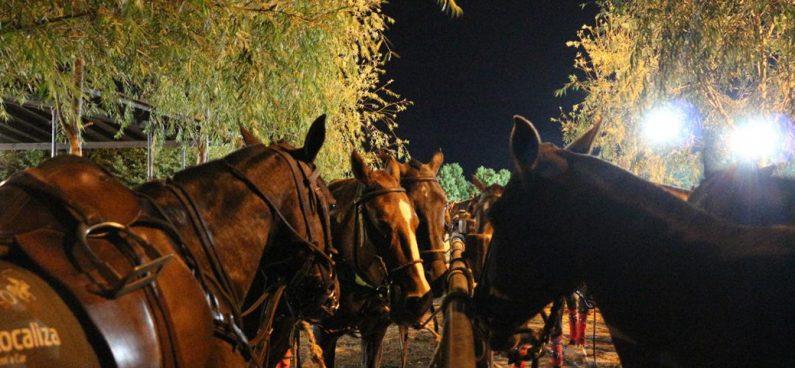 Horse Vision
