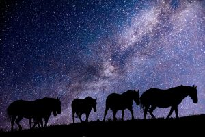Horses' learning overnight