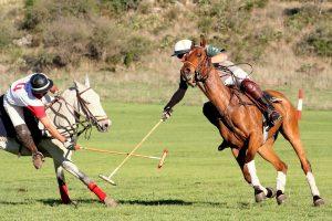 care of a polo horse